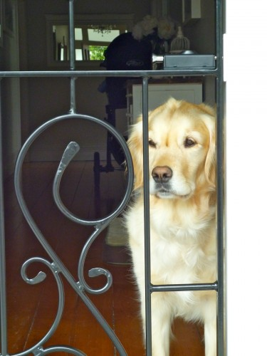 Grange Doggy Door