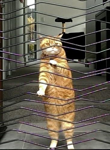 Molly held captive